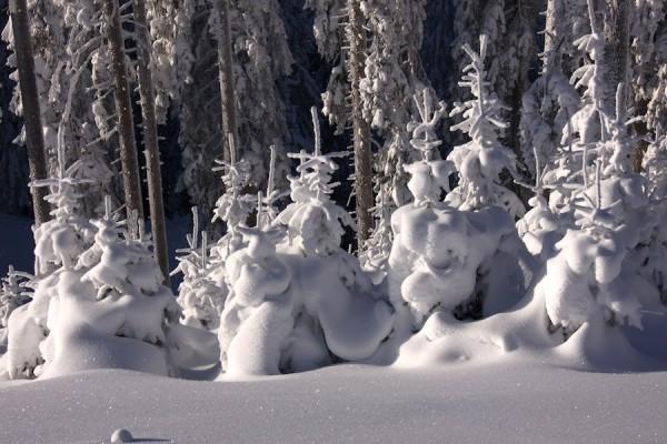 Weihnachtsbäume in Russbach :-)
