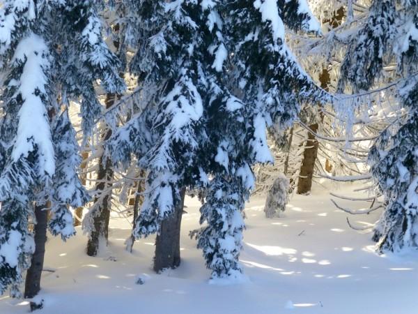 letzte Sonnenstrahlen durchleuchten den Wald