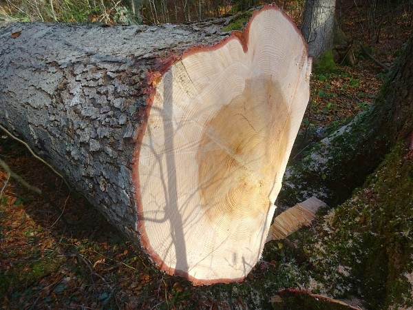 sogar einer unserer Bäume ist in Herzform gewachsen :-)