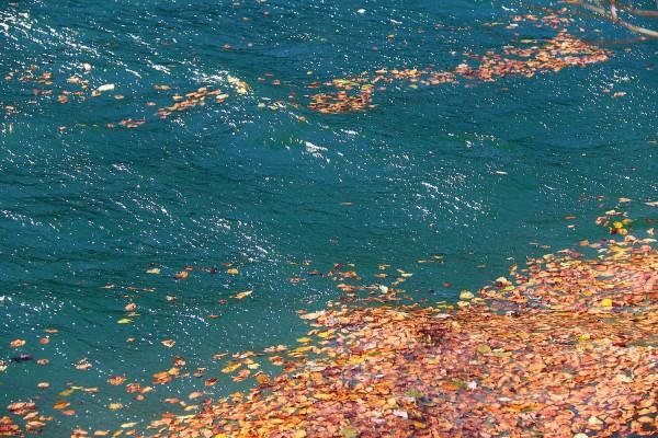 Blätterteppich im See