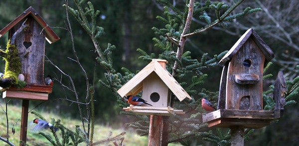 Vögel Schnee Russbach