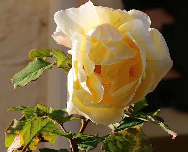 Russbach - Blumen