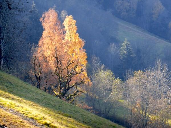 Hahnbaumalm, meine schöne Heimat