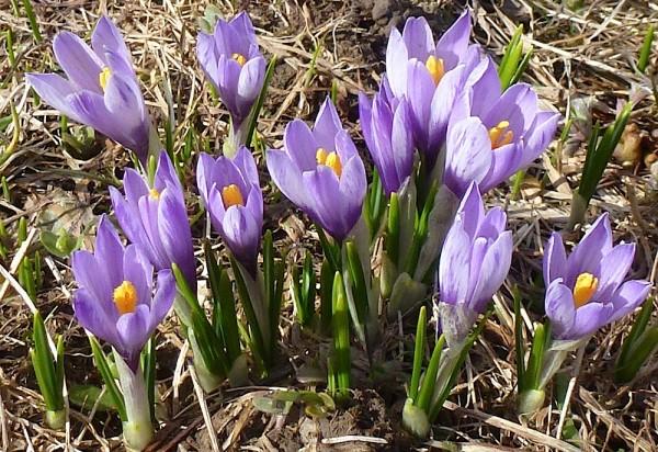 Frühling - Blumen