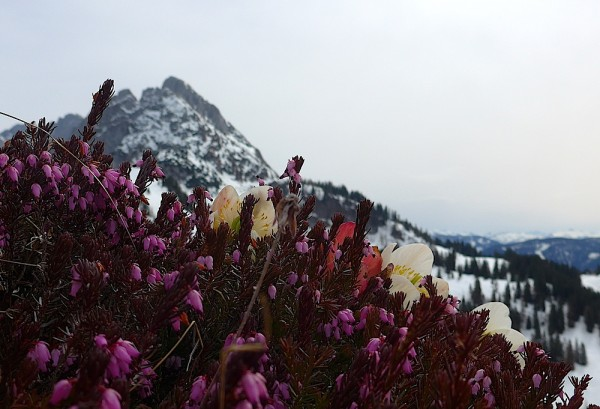 Saisonschluss Dachstein West