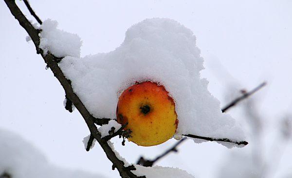 Vitamine auch im Winter